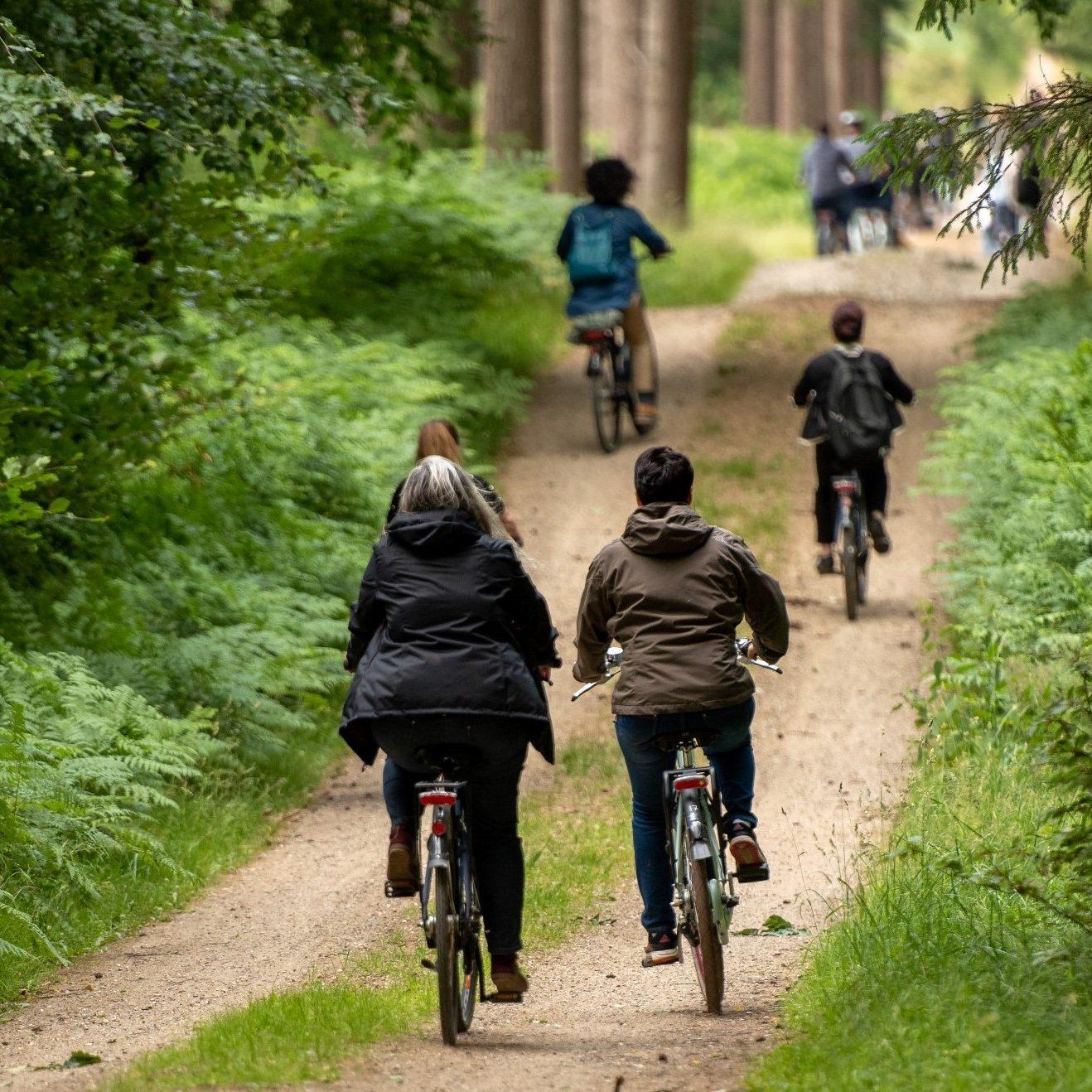 Cykler i Gribskov